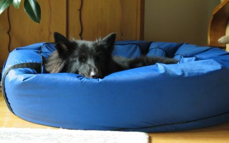 Waterproof Dog Beds - Post Thumbnail