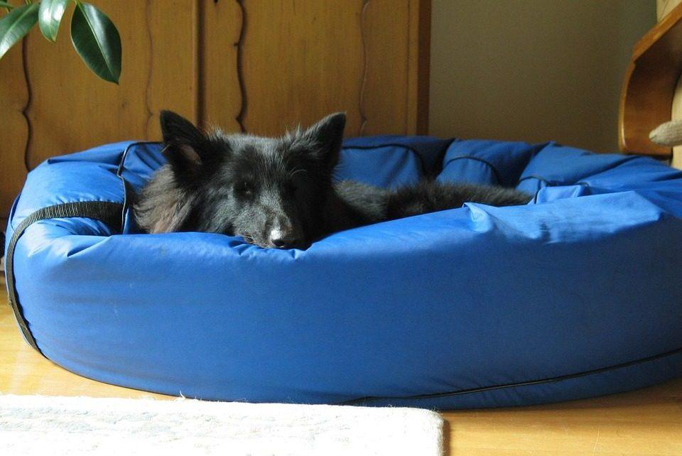 Waterproof Dog Beds - Post Thumbnail